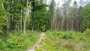 wandeling moppie 071